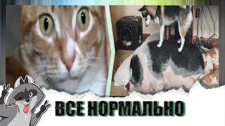 Подборка видео о животных 2019 /Ржака до слез / ПОПРОБУЙ НЕ ЗАСМЕЯТЬСЯ