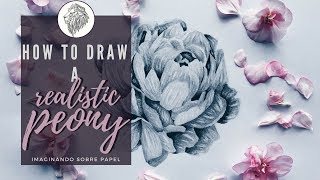 Drawing a realistic peony - Imaginando sobre papel