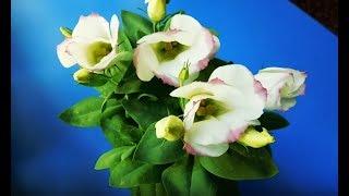 видео Эустома: как вырастить цветок, сорта, посадить, правила выращивания ирландской розы