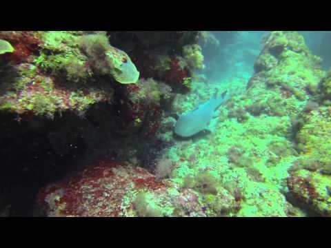 Barbados diving 2014