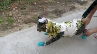 Кот убежал к соседям В ОДЕЖДЕ!