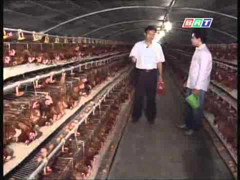 mô hình chăn nuôi gà đễ chuồng lạnh
