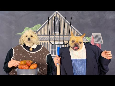 Merrick Whole Earth Farms Dog Food