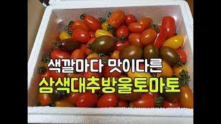 색깔마다 맛이 다른 신기한 토마토, 삼색대추방울토마토를…