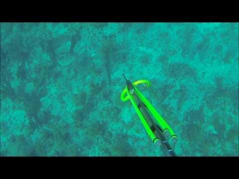 Spearfishing Ambergris Caye Belize 2014