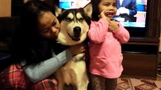 Siberian Husky the Ladies Dog, Wants Hugs and Kisses!