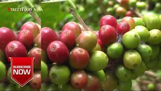 Coffee Museum at Araku - Coffee house - Andhra Coffee