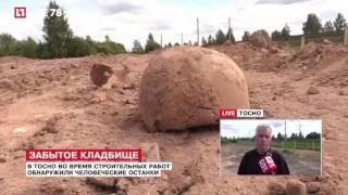 В Тосно нашли человеческие останки
