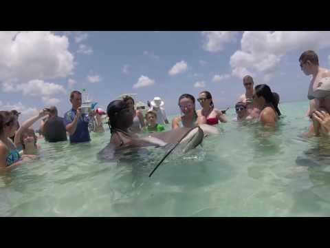 Georgetown Grand Cayman - Stingray city.