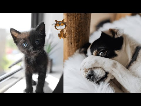 Funniest Cats and Dogs - Cute and Funny Pets - Funny Animals Compilation 5