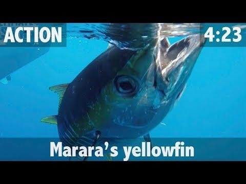 MARARA'S YELLOWFIN TUNA