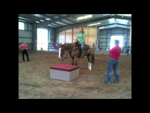 Liz riding Tommie Turvey's stunt horse, Blade