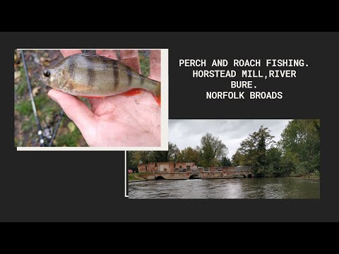 Perch And Roach Fishing • Horstead Mill • Norfolk Broads • River Bure • October 2019