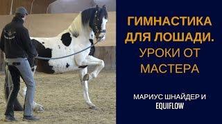 Гимнастика для лошади. Уроки мастерства работы в руках и на корде.
