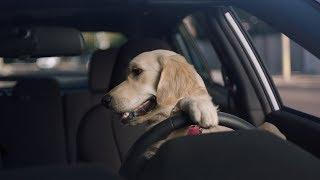 「はい、そこでハンドル切って…あ。。」犬の親子の運転教習風景