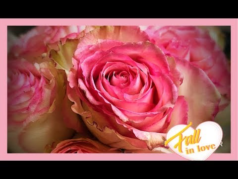How To Preserve Roses With Wax Dipping Youtube