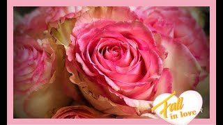 ~ How To Preserve Roses With Wax Dipping ~