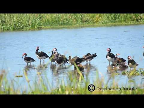 Trip to Uganda by Destination Jungle: Murchison Falls National Park