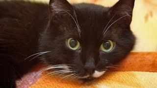 Коты черные, и белые