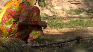 Woman making broomstick in rural Uttar Pradesh!