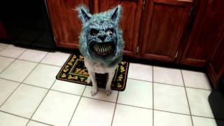 My Dog is a WEREWOLF! Thumbnail