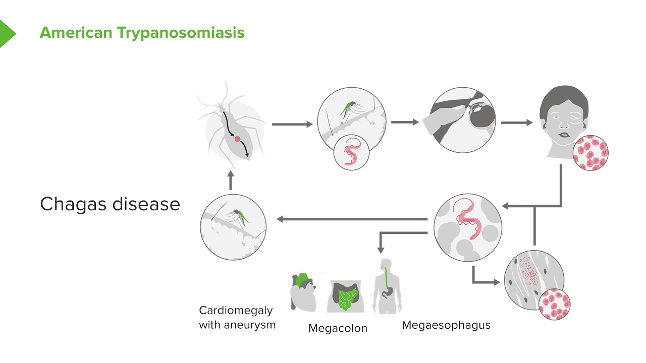 hight resolution of trypanosoma microbiology online course 7