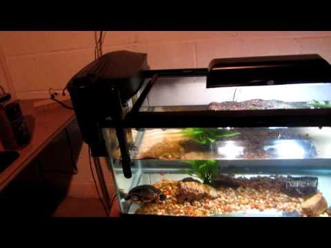 eastern painted turtle tank setup