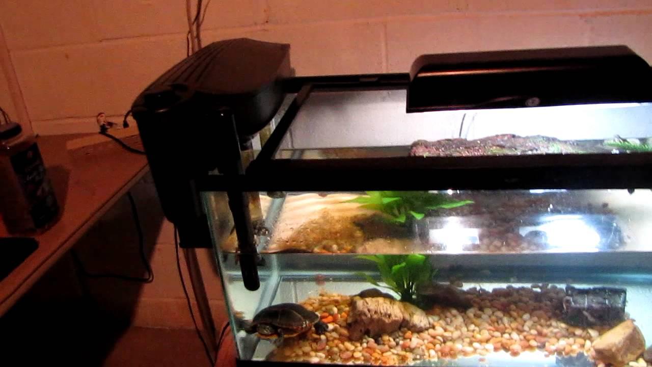 eastern painted turtle tank setup - YouTube