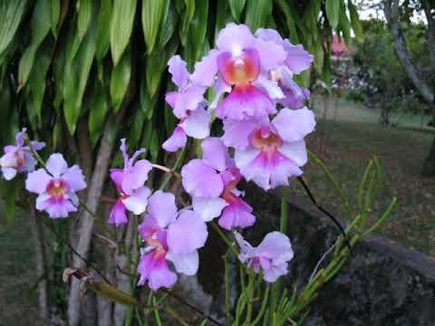 Daniella's Bungalows - Bel Ombre, Mahe - Seychelles