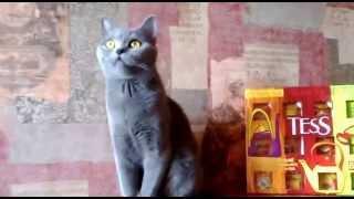 Настоящая Леди-Кошка.