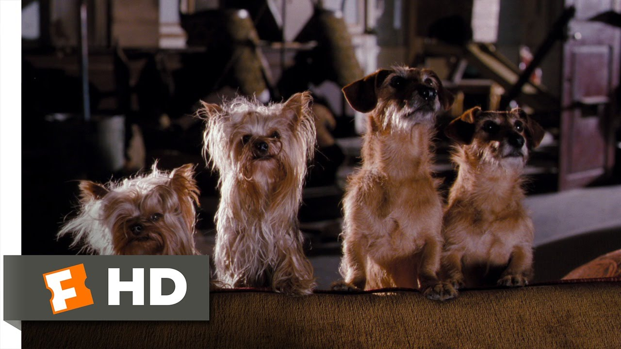Hotel For Dogs 10 10 Movie Clip Dog Catapult 2009 Hd Youtube