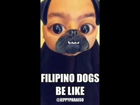 FILIPINO DOGS BE LIKE