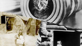 Tribute to the Cats of World War I: 1914 – 1918