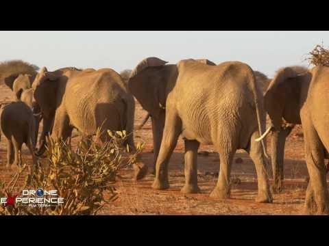 IL KENYA CON DALLA WATAMU TRA MARE E SAFARI BY DRONE EXPERIENCE I LOVE AFRICA
