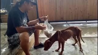 Skinny Malnourished Dog Rescued From Riverside Road