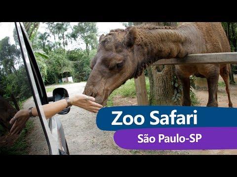 Zoo Safari | Zoológico São Paulo | HD