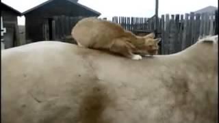 Прикольные кошки 2. cool and funny cats