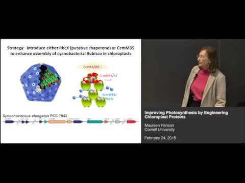 Maureen Hanson - Improving photosynthesis by engineering chloroplast proteins