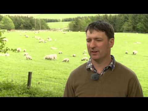 Scotland's Farming Year - Hill Farmer Interview