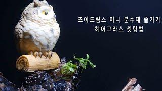 조이드림스 미니분수대 거실화분 실내화초(난초?) 식물 …
