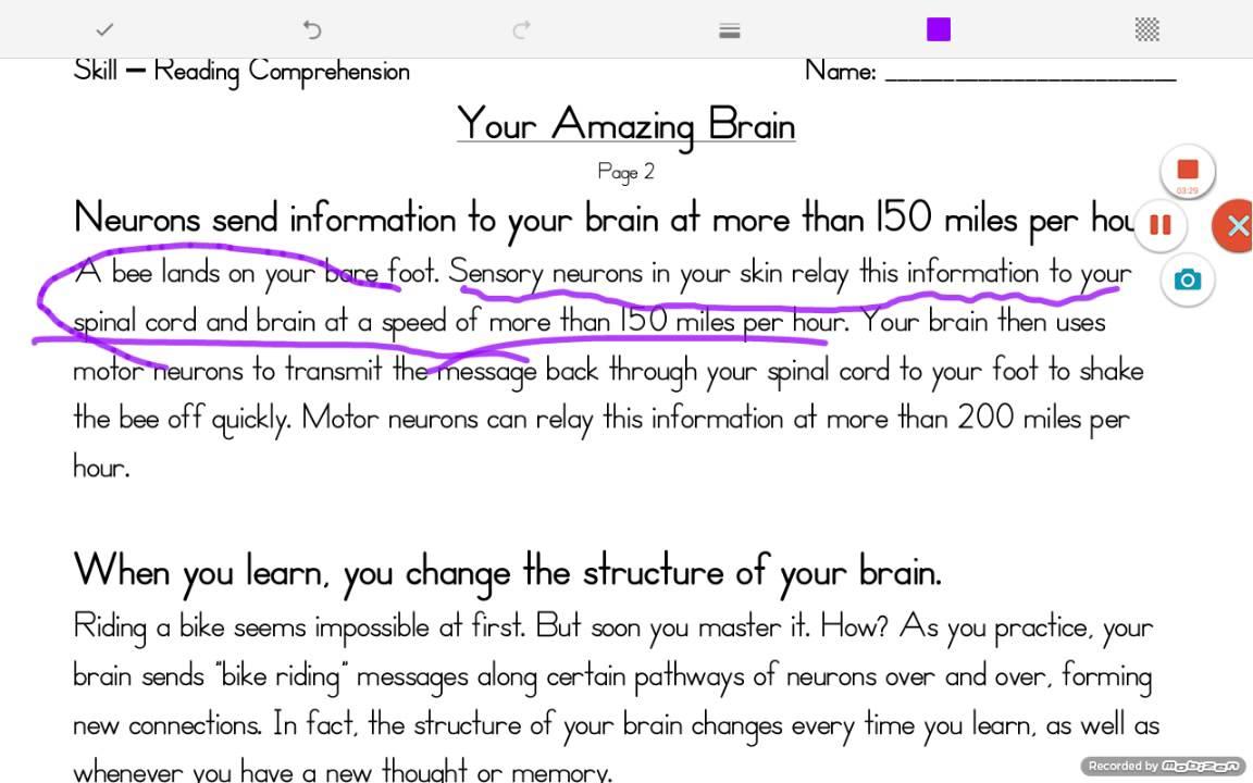 Your Amazing Brain Worksheet - YouTube