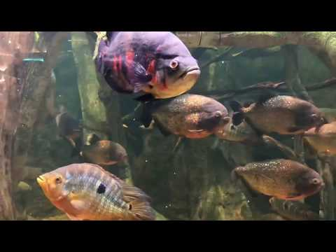 Touring the Scott Aquarium- Henry Doorly Zoo (Omaha, NE) in under 4 minutes