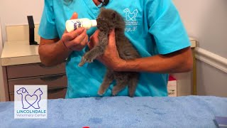 Bottle-Feeding a Kitten