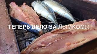 Рыба. Сериола. Скумбрия. Рыба горячего копчения.