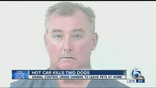 Hot Car Kills Two Dogs
