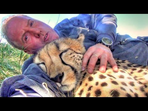 Taking A Nap With Loving Female Cheetah – Cat Cuddles & falls Asleep In Man's Arms -Needs Baby Binky