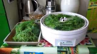 Семья Бровченко. Как сушить зелень и травы в сушилке.(Как сушить травы и зелень. Сколько сушатся травы. Так же смотрите все видео - ролики на тему