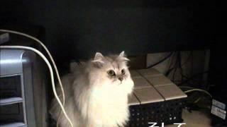 緊急地震速報を忘れない猫 thumbnail