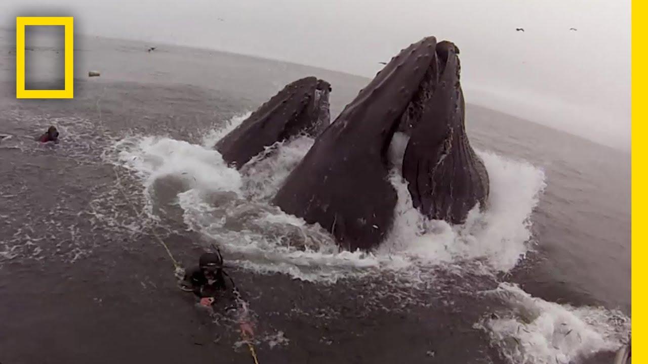 クジラに飲み込まれそうになった潜水士 |ナショジオ