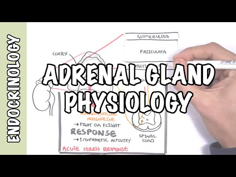 Endocrinology - Adrenal